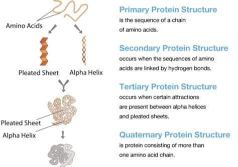 rype 4 secondary rype 2 1 12 proteins biology libretexts