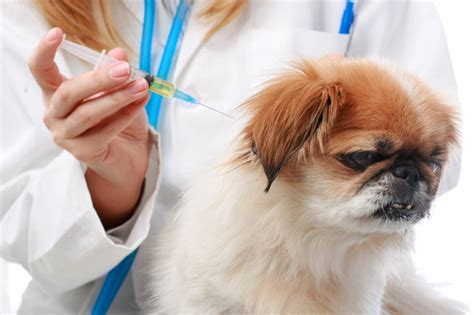 how many vaccinations do puppies need are we vaccinating our dogs cats frequently petsci