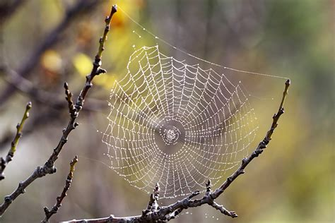 spiders web 301 moved permanently