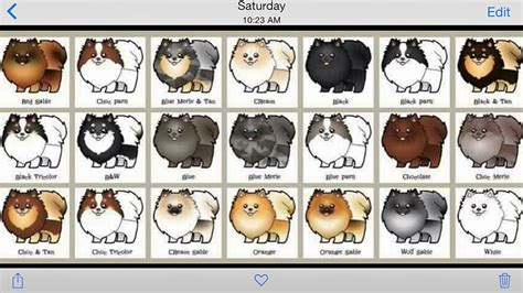 puppy color calculator pomeranian colors