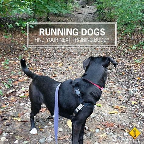 are rottweilers running partners the world s catalog of ideas