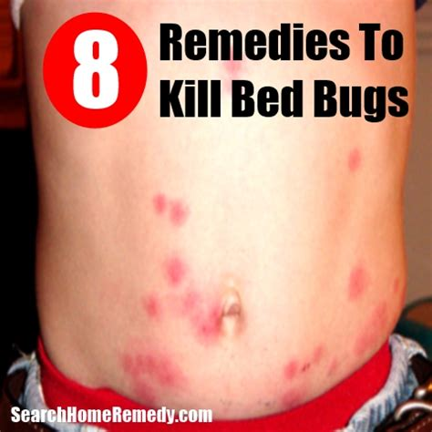 bed bug home remedies 8 kill bed bugs home remedies natural treatments cures