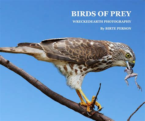 birds of prey by birte person arts photography blurb