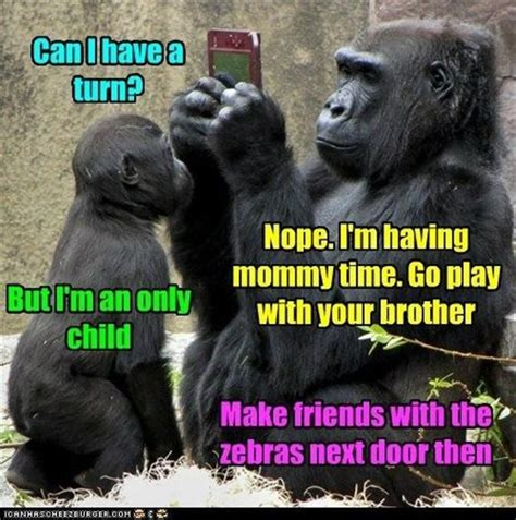 monkey pictures with captions 27 best monkey captions images on