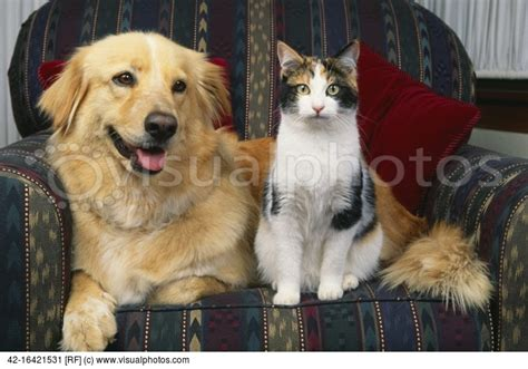 cats and dogs living together dogs and cats living together 29 desktop background funnypicture org