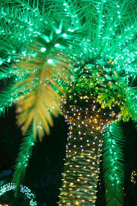 palm tree lights guide to the beaches of fort myers sanibel