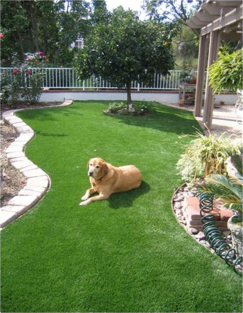 do dogs need grass backyard landscaping for dogs on pinterest wood fences garden