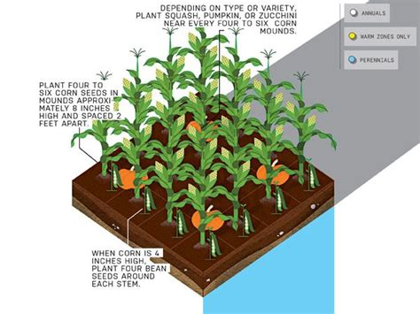 Three Garden Layout This Is The Year You Grow Your Own Veggies Gardens