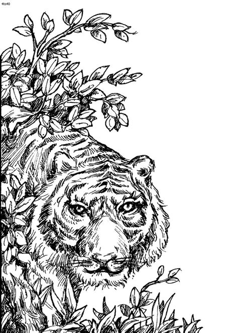 coloring pages for adults animals chicago wolves coloring species animal coloring pages