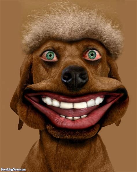 dogs with hair human animals pictures gallery freaking news