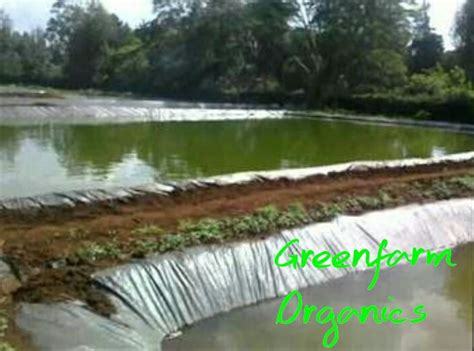 backyard catfish farming greenfarm organics fish farming in kenya