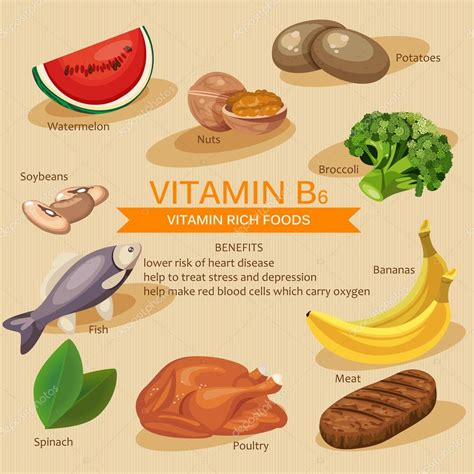b6 alimenti vitamins and minerals foods illustration vector set of