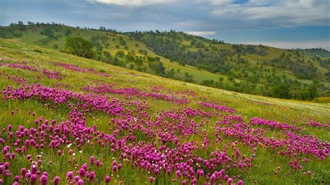 flower landscape 29017 1920x1080 px hdwallsource com
