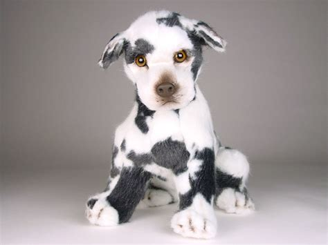 harlequin great dane puppies harlequin great dane puppy 3311