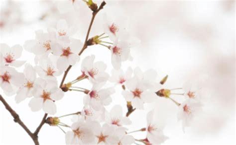 fiori di pasqua fiori di pasqua leitv