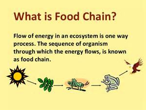 Ford Chaign Food Chain Food Web And Ecological Pyramids