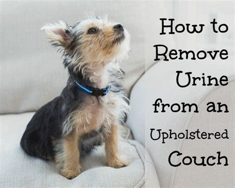 How To Clean Cat Urine From Upholstery by 17 Best Images About Clean It Furniture On