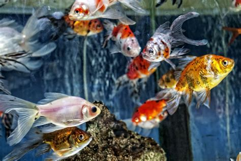 how to lower high water temperatures in your aquarium