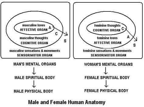 mental anatomy introduction to theistic psychology by the organic mind discovering the mental world of