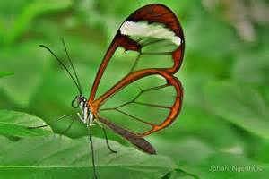 Butterfly Duvet Covers Quot Greta Oto Espejitos Glasswing Butterfly Quot By Johan