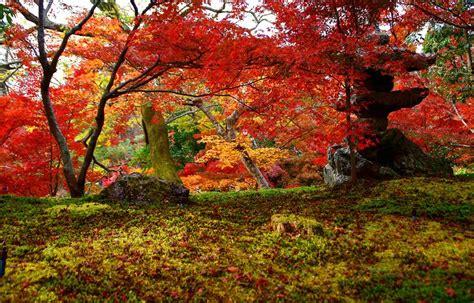 imagenes de uñas otoño invierno киото осенью 31 фото