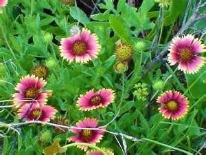 Flowers In St Petersburg - st petersburg florida photos