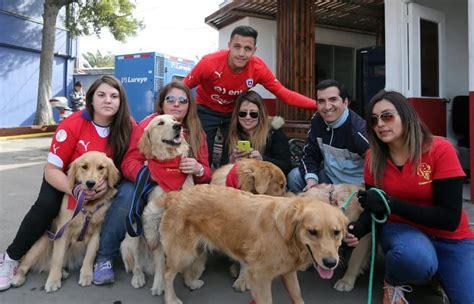 alexis sanchez y sus perros alexis s 225 nchez recibi 243 a sus fans del club golden