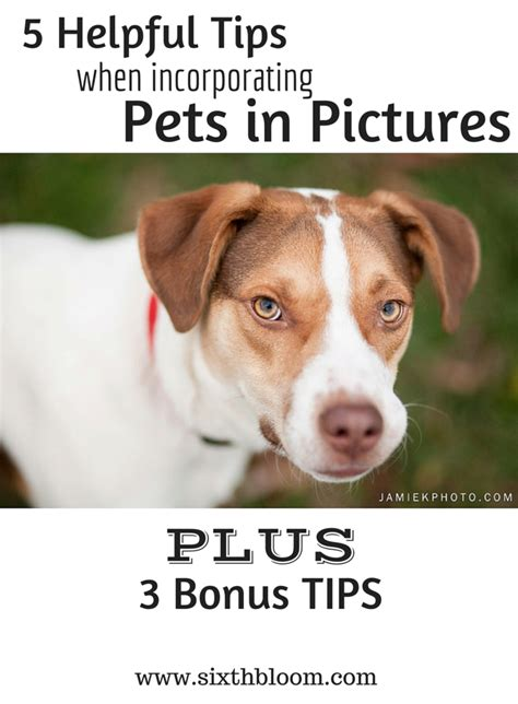 5 Helpful Posts To Blogstalk by 5 Helpful Tips When Incorporating Pets In Pictures