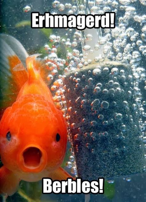 Funny Fish Memes - 30 funny animal captions part 19 30 pics amazing