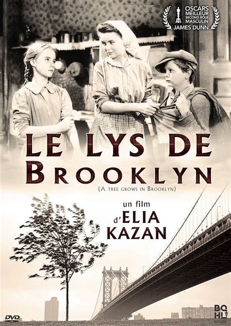 libro le lys de brooklyn sortie dvd le lys de brooklyn de elia kazan critique cinechronicle