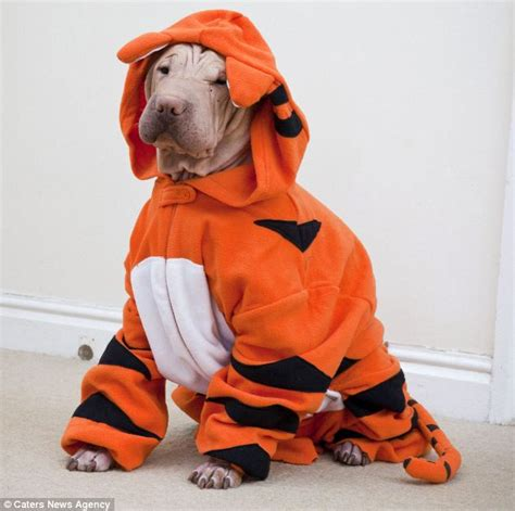 onesies for dogs hairless shar pei needs primark onesie to keep warm during chilly winter daily