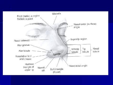 Jean Paul Font Md by Rhinoplasty Nasal Tip Tip Jean Paul Font Md