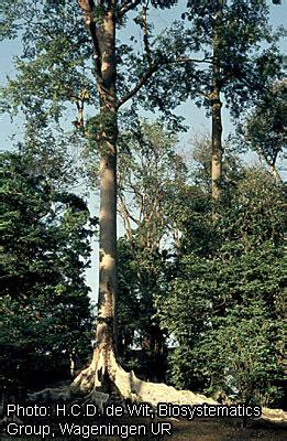 Растительность Африки