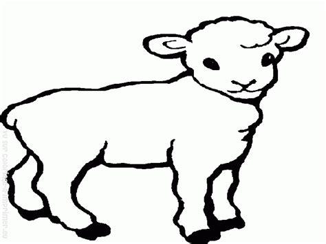 simple sheep coloring page coloriage agneau les beaux dessins de animaux 224 imprimer