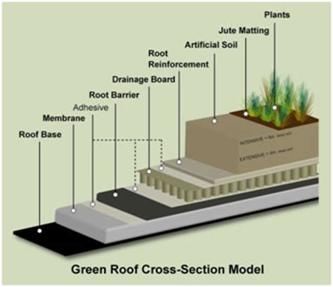 section of green roof green roofs
