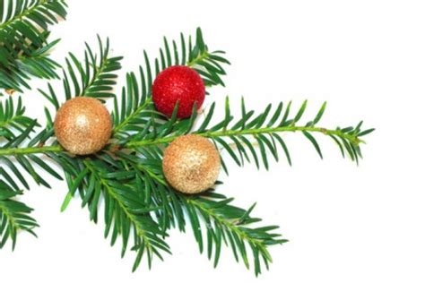 5 tips to preserve your christmas tree stepin2