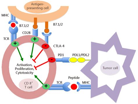 Tumor Immune Microenvironment Characterization And Response To Anti Pd 1 Therapy Santarpia