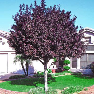 trees e l m landscaping design inc