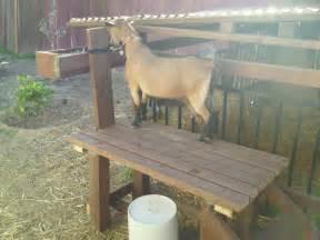 Simple Garden Bench Plans Free Goat Milking Stand Garden Pool