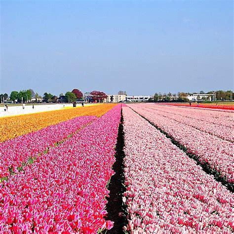 ci di fiori olanda passione viaggi ecco i 10 posti pi 249 colorati mondo