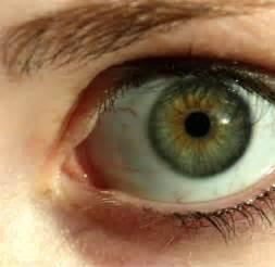 green eye color file green eye lashes jpg