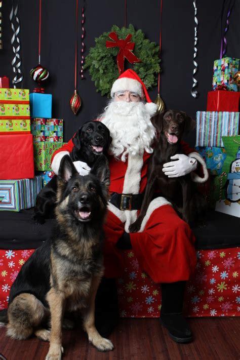 holiday gift guide   dog rogue retrievers