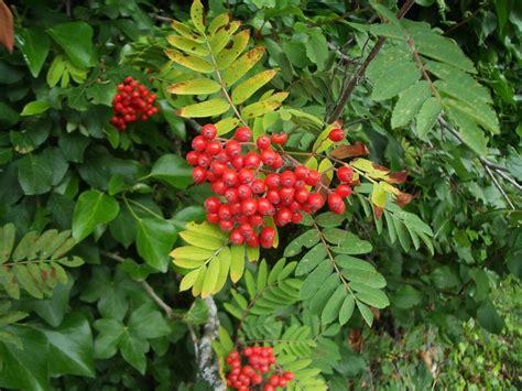 Garden Plants Royal Botanic Garden Edinburgh Our Nominated Plants