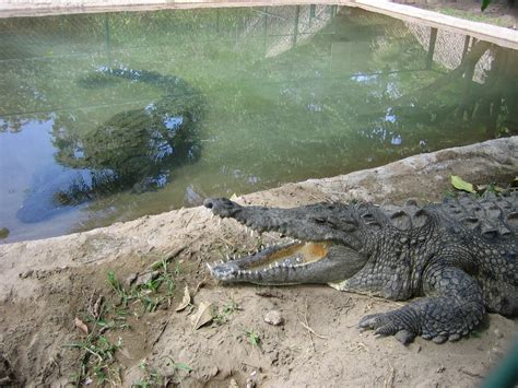 File:Crocodile farm in Mexico.JPG - Wikimedia Commons