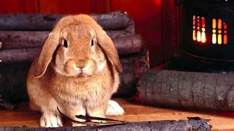 animali piccoli da tenere in casa come tenere un coniglio in casa