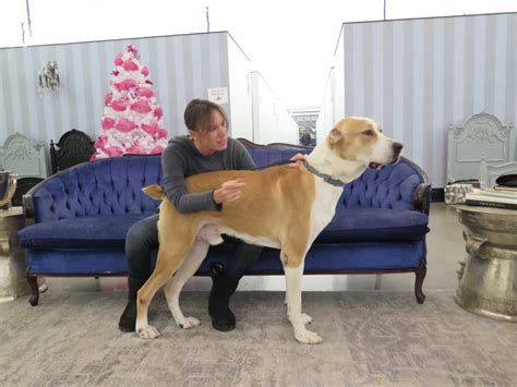 puppy tales meet the israeli canadian rescuing stray dogs from israel