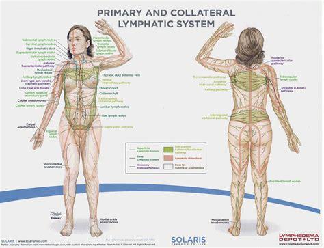lymph node locations lymph nodes locations in the diagram anatomy organ