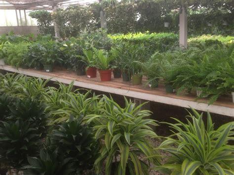 rolling greens culver city 45 photos nurseries gardening culver city culver city ca