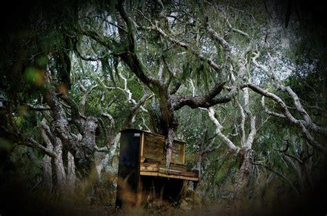 tree piano the piano tree by sessat on deviantart