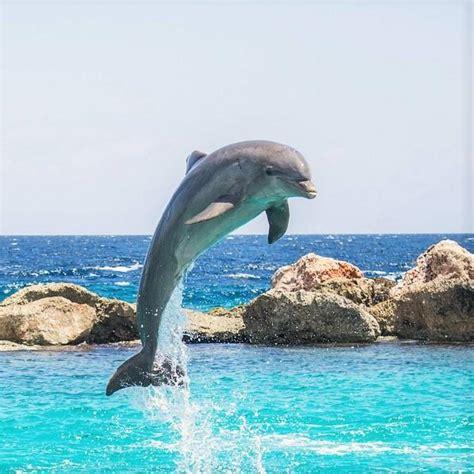 los animales marinos marine animales marinos ejemplos y curiosidades